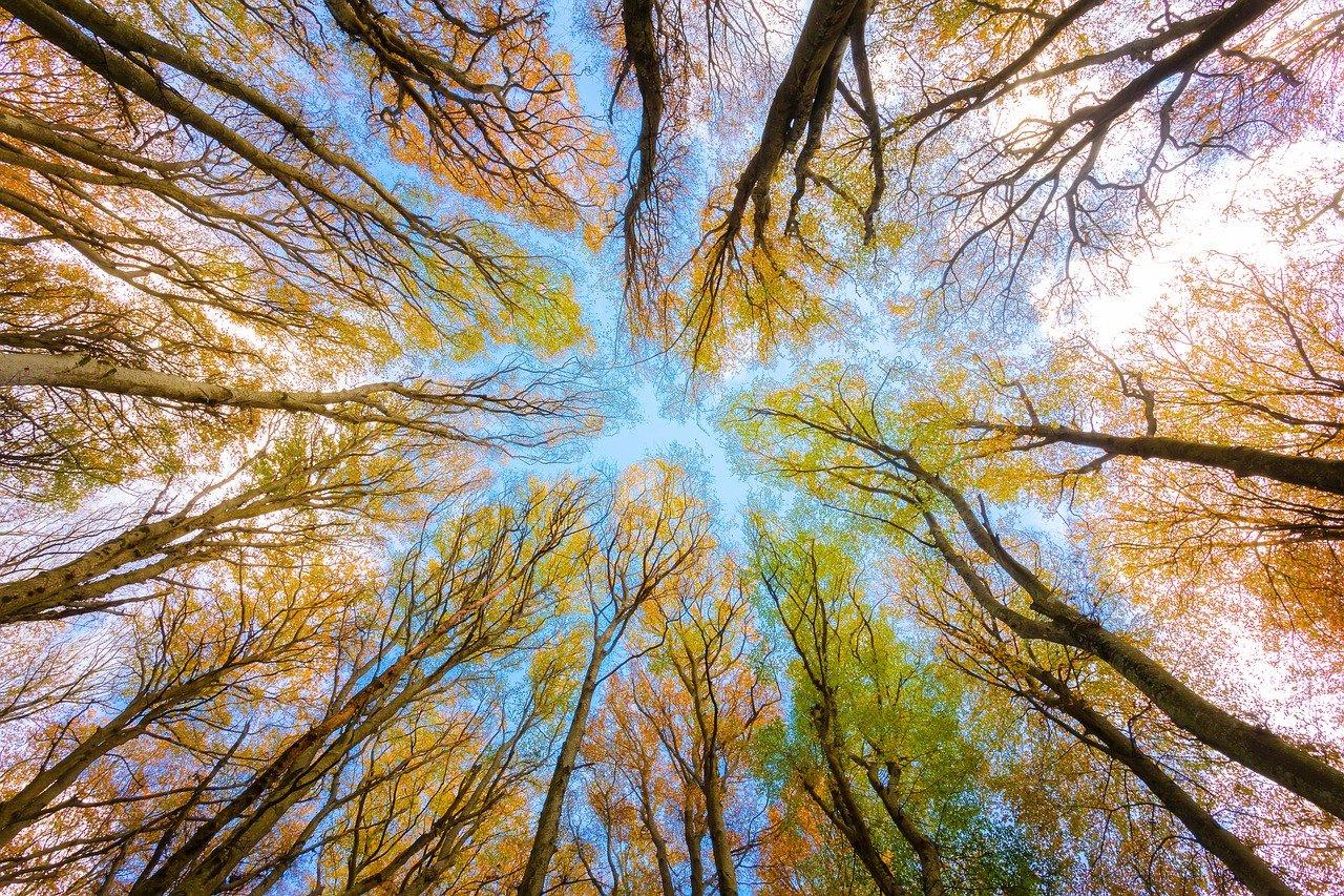Ontwikkelingen en trends Duurzaamheid